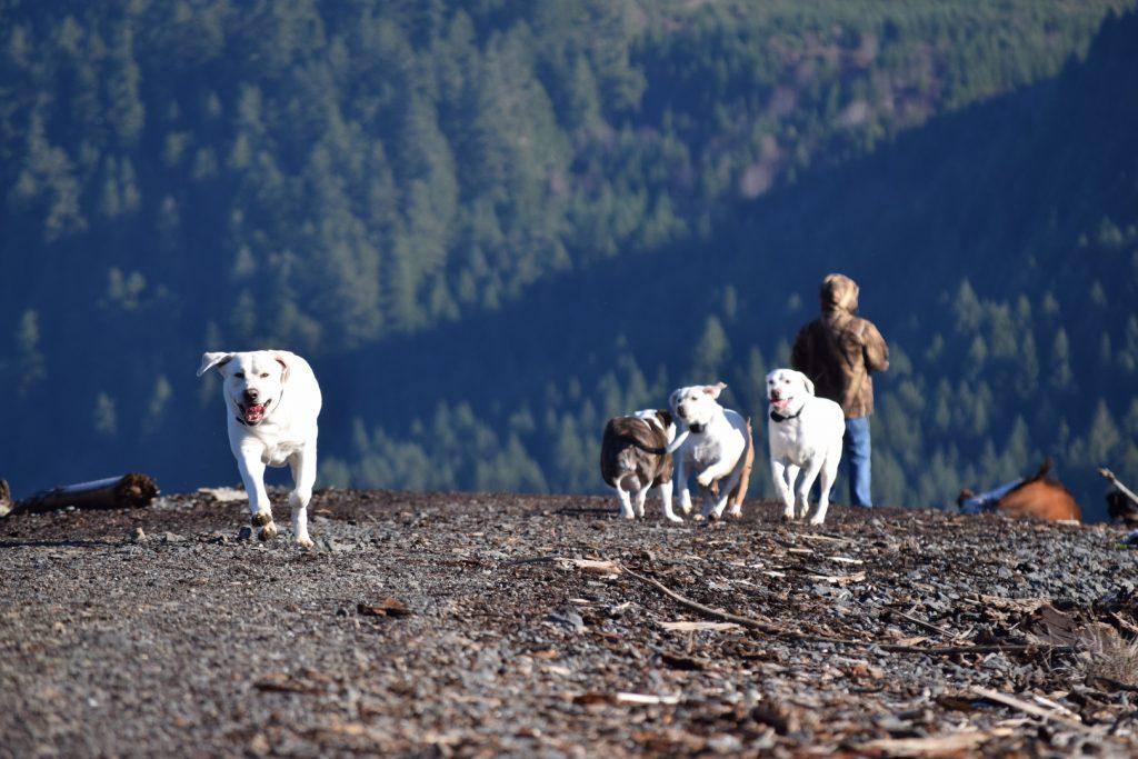 Grand Forks Labradors